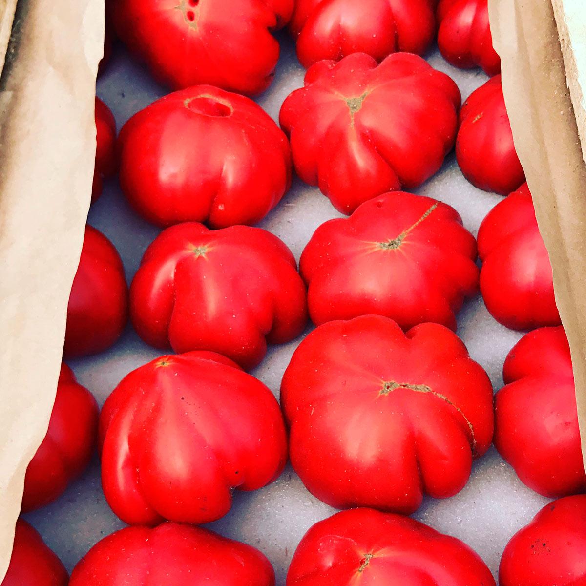 Выращивание помидоров в азербайджане 29